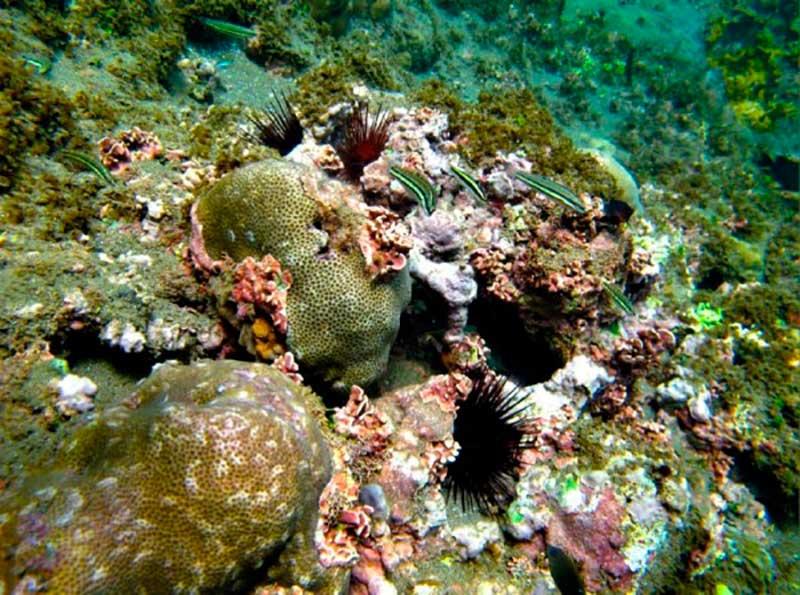 conanp-arrecifes