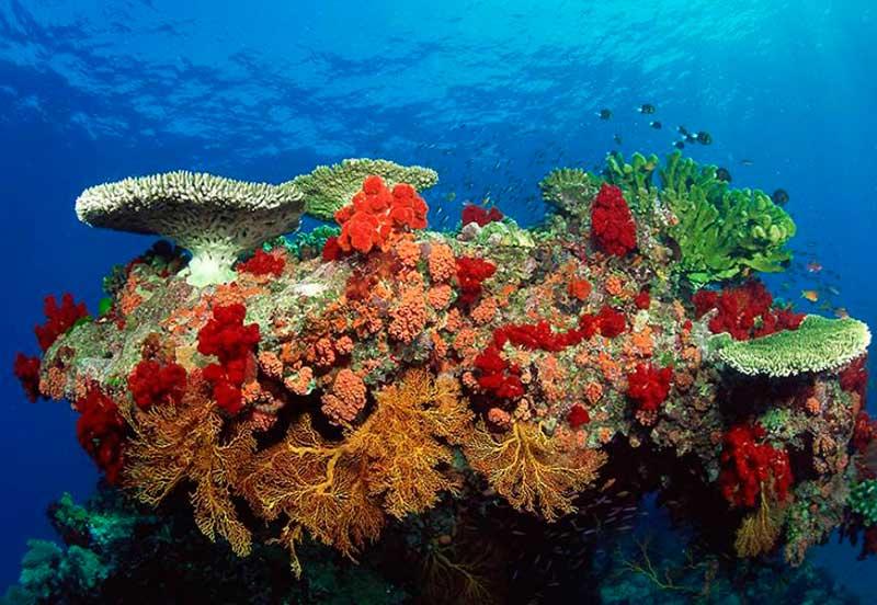 conanp-arrecifes01