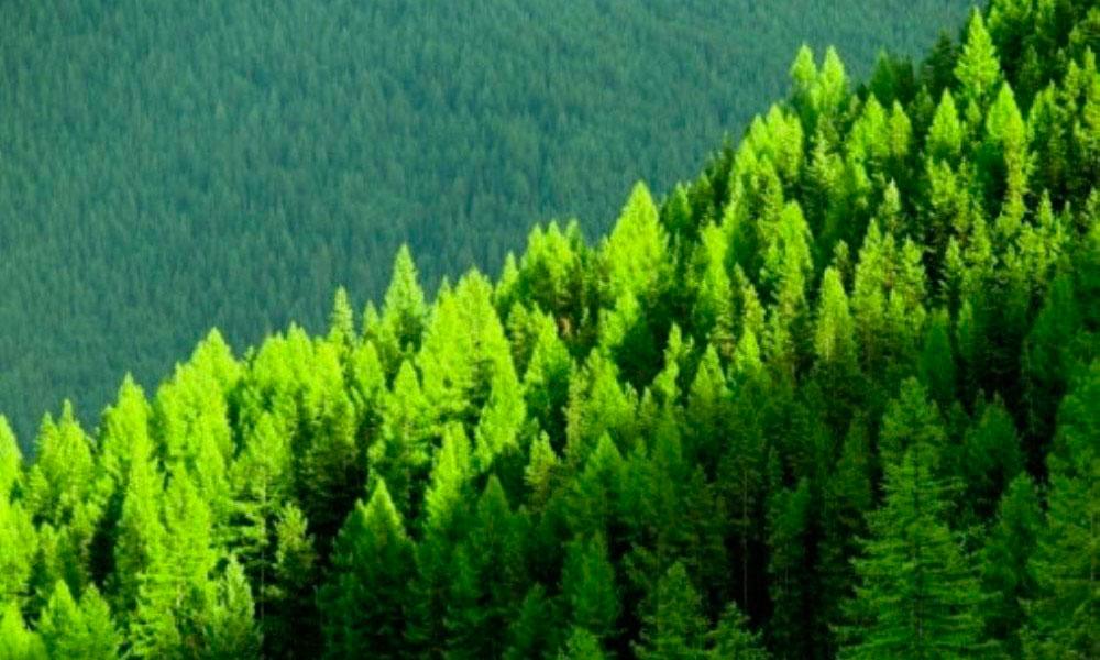 Concesiones forestales en bosques tropicales for Importancia de los viveros forestales