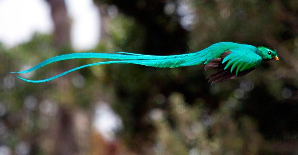 Resultado de imagen de quetzal