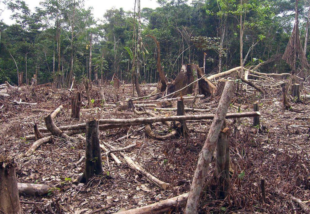 control-reforestacion
