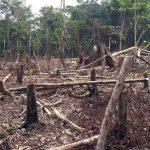 ¿Cómo va México en el control de deforestación?