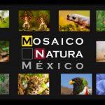 Conabio convoca a concurso: Mosaico Natura México