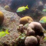 Diseñarán corales casi idénticos a los naturales con impresión 3D