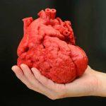 Imprimen corazón artificial flexible en 3D