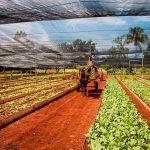 Cuba ejemplo en agricultura ecológica