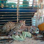 Delitos contra la biodiversidad en México