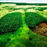 Plantean considerar a los derechos humanos en el tema ambiental