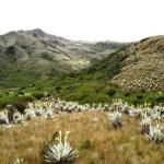Desarrollan un mapa digital que predice las especies vegetales más adecuadas para reforestar zonas de alta montaña