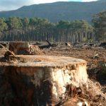 México enfrenta desafíos ambientales tan grandes como su biodiversidad