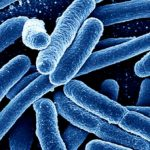 Desarrolla biosensor para detectar bacteria de E. coli en alimentos