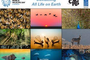 Algunos tips para entender mejor el Día Mundial de la Naturaleza