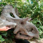 Científicos descubren nueva especie de dinosaurio en Coahuila