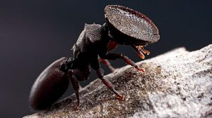 diversidad-hormigas