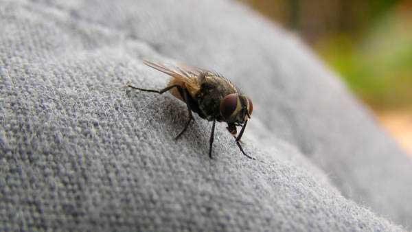 doble-moscas01