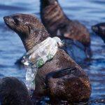 Crece nuevo ecosistema de plástico en los océanos