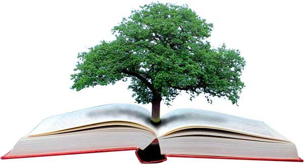 educacion-ambiente01
