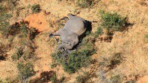 misteriosa muerte masiva de elefantes