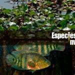 Especies invasoras: segunda causa de pérdida de biodiversidad