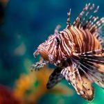 Especies invasoras, segunda amenaza mundial a la biodiversidad
