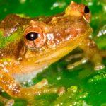Hallan especies desconocidas en Perú