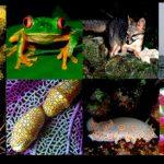 Estado mexicano debe brindar mayor protección a la biodiversidad: CNDH