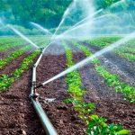 Exploran uso de agua residual en la agricultura