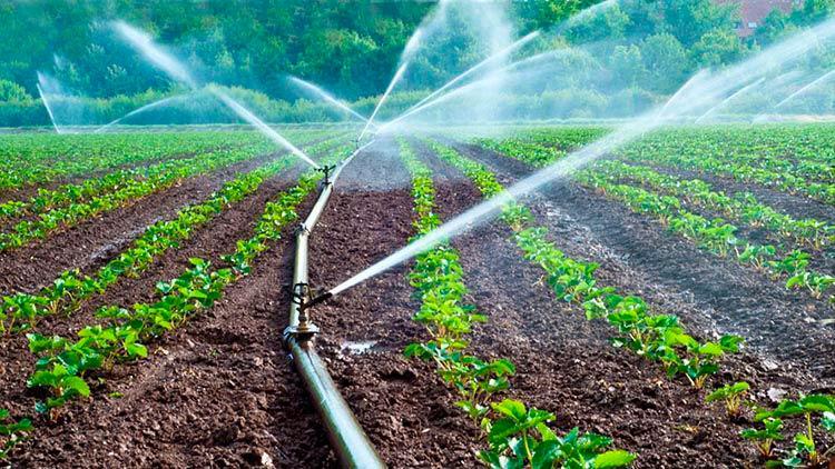 Exploran uso de agua residual en la agricultura teorema for Vivero agronomia