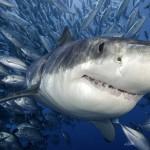 Exposición fotográfica de tiburones y mantas en MHN