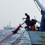 FAO apoyará a países de América a erradicar pesca ilegal