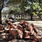 Autorizan tala en bosque de Tlalpan