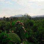 Amenazada biodiversidad del Pedregal por flora exótica