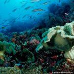 Fortalecer los océanos ante el cambio climático, la clave