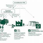 FSC reitera su esfuerzo por crear 'Bosques para todos para siempre'