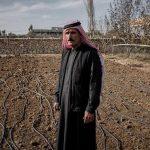 Gallinas, invernaderos y abejas serían los salvadores en Iraq