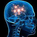 Glucosa producida por el cuerpo, alimento para el cerebro