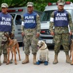 Héroes de cuatro patas salvan vidas en Oaxaca