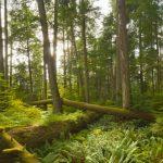Crece amenaza de hongos patógenos en bosques en México