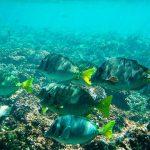Imprimen en 3D el fondo marino de Huatulco