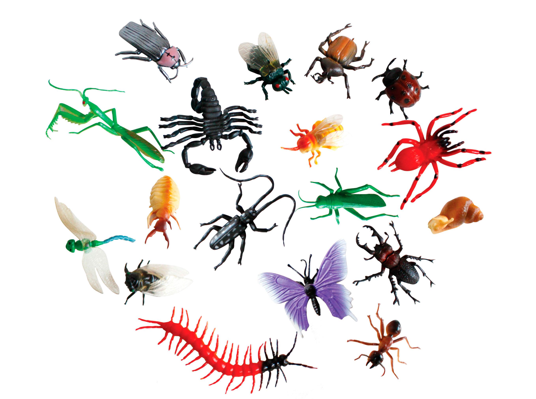 Olvidan a los insectos en la conservaci n teorema ambiental - Insectos en casa fotos ...