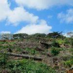 Profepa interpone denuncia por remoción de vegetación en Nayarit