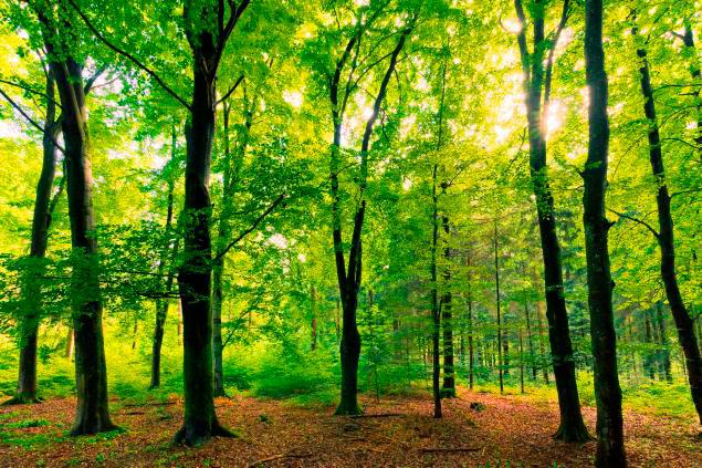 inversion-bosques