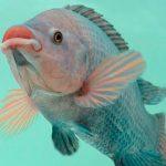 Proponen utilización de supermachos y menos hormonas en peces
