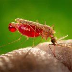 Estudian riesgos por uso indiscriminado de pesticidas