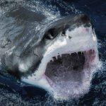 IPN crea proyecto a favor tiburones y rayas