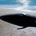 IPN activa colaboración a favor de mamíferos marinos