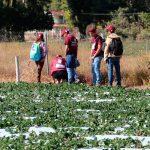 IPN cobija proyecto de agricultura en Michoacán