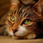Científicos japoneses estudian inteligencia de gatos