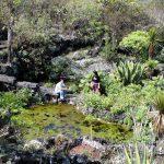 Jardín Botánico-UNAM invita a adoptar plantas en riesgo de extinción