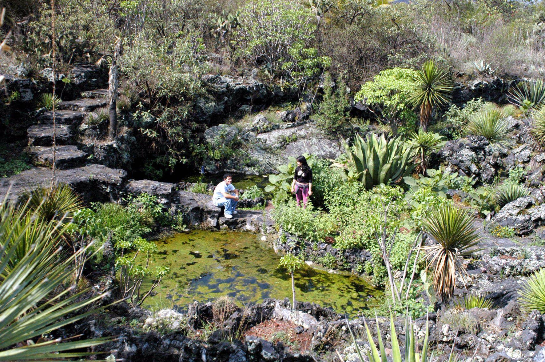 Jard n bot nico unam invita a adoptar plantas en riesgo de for Jardin botanico unam 2015